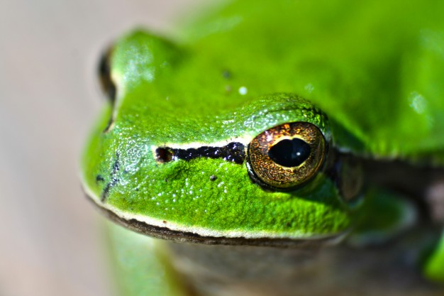 close-up-of-frog-outdoors_1162-55